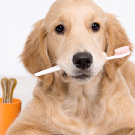 ozodent-pet-oral-care